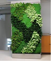 Amazing As A Full Service Green Wall Company With A Thorough Horticultural  Background, We Will Consult With You On Plant Choices For Your Specific  Location.